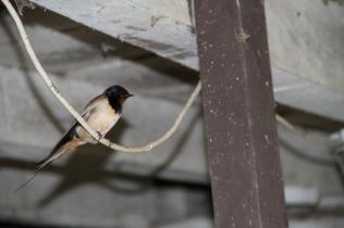 Vogelbesuch