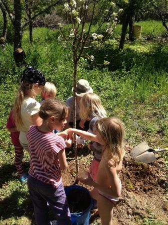 Pflanzaktion im Obstgarten