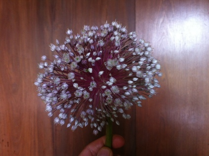 Lauchblüten-Feuerwerk: würzig & schmackhaft