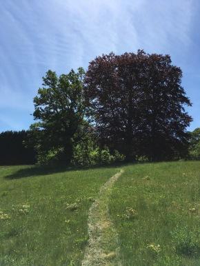 Umherstreifen im Park - auch schön!
